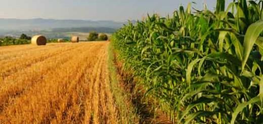 Agricoltura-e-clima